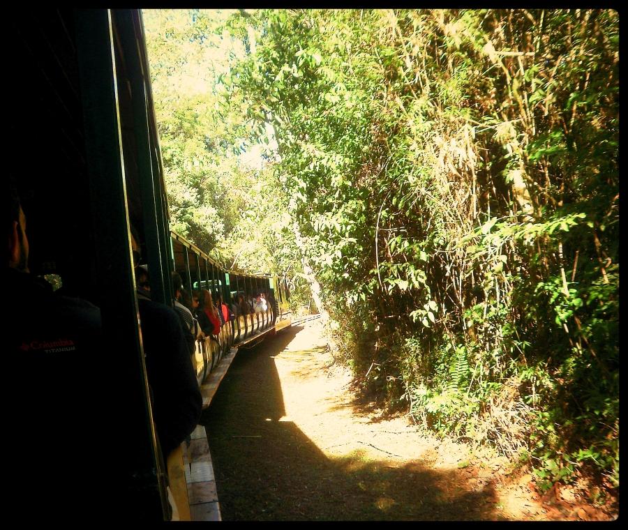 tren ecologico